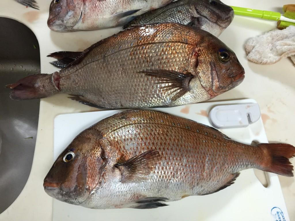20150424魚釣り3
